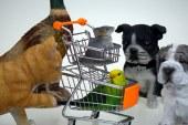 רויאל פט: מגוון רחב של ציוד איכותי לבעלי חיים