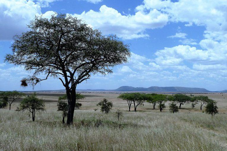 טיולים לטנזניה